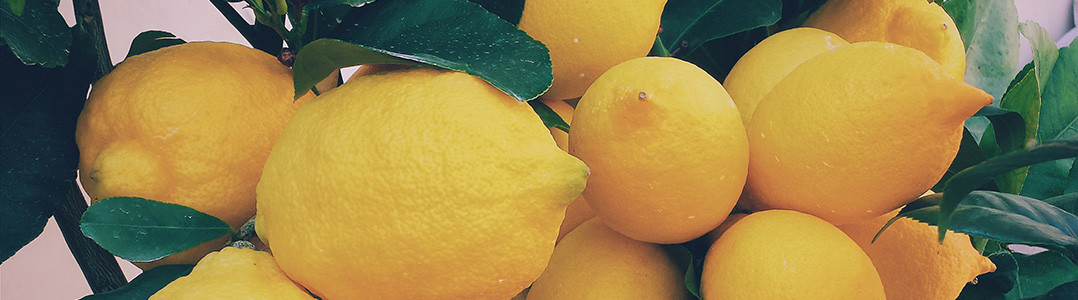 A bunch of lemons hanging off a tree
