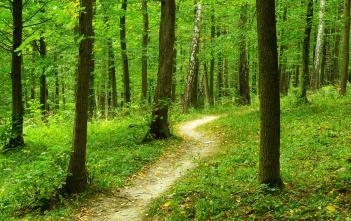 A trail in a green forest.