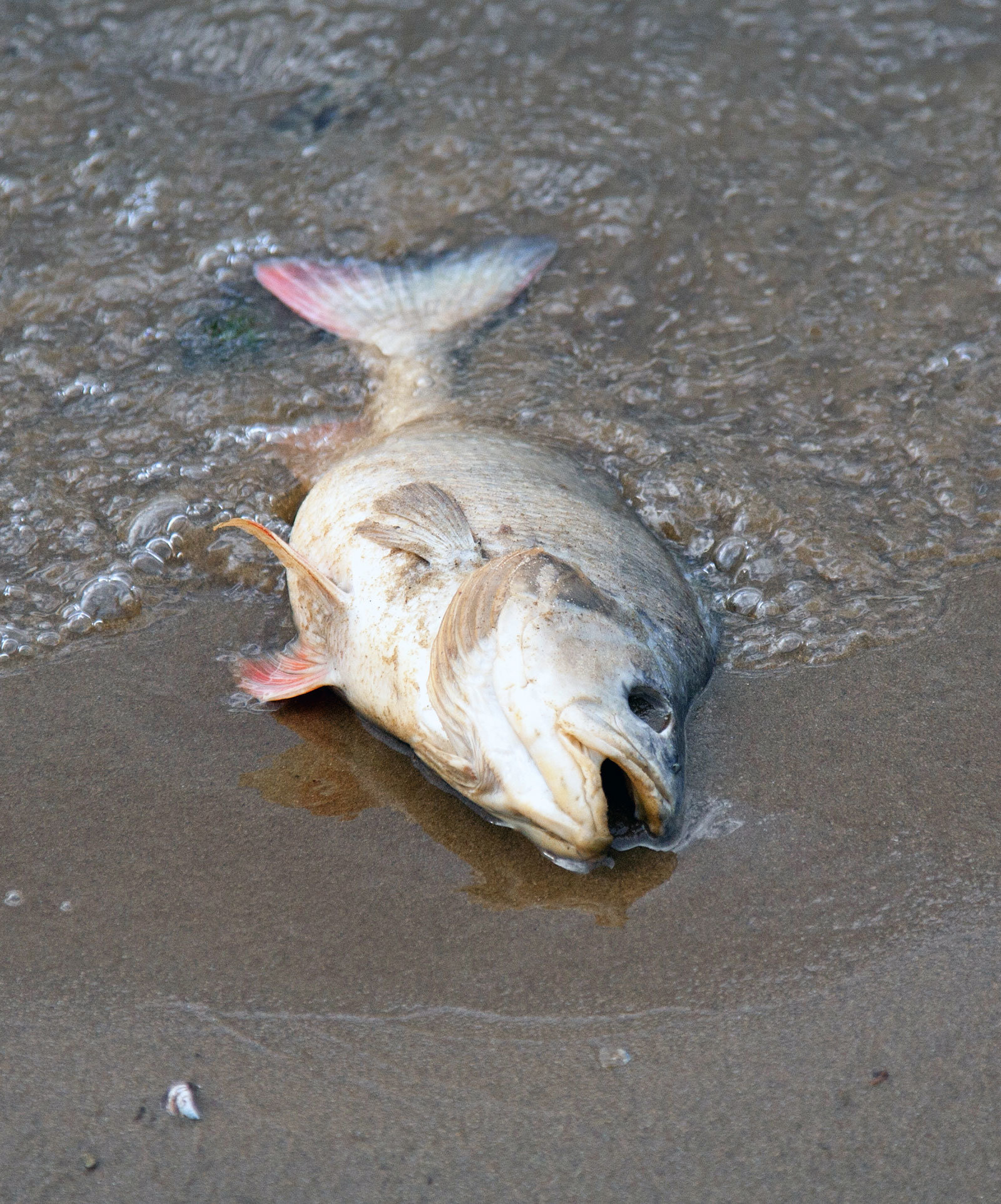 A dead fish on the shore.