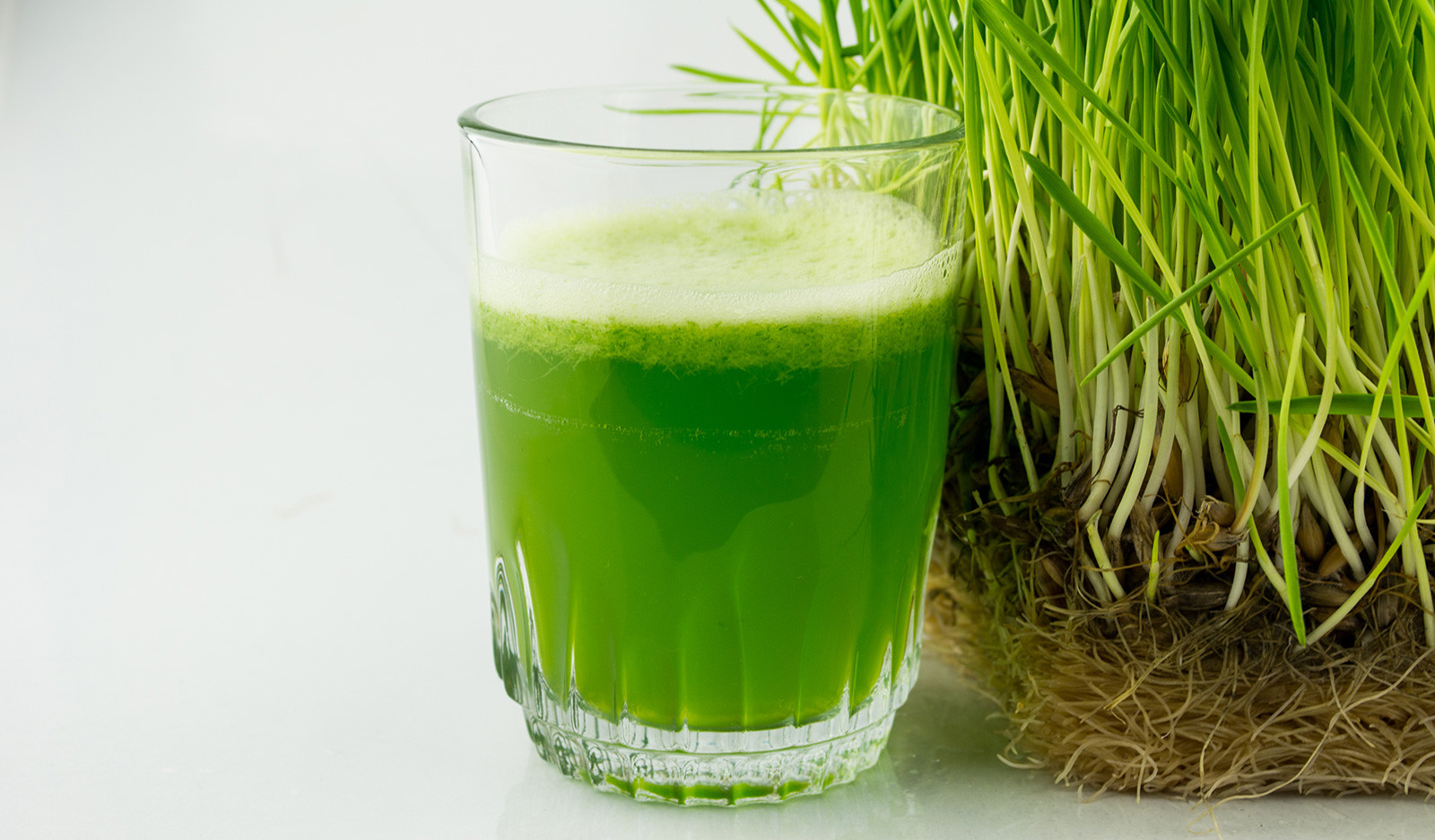 Organic, green wheat-grass juice in a glass.