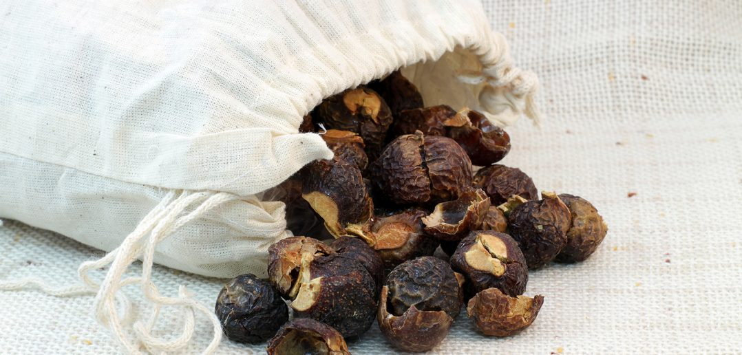 Soap nuts in a drawstring bag, with some soap nuts spilling out of it.