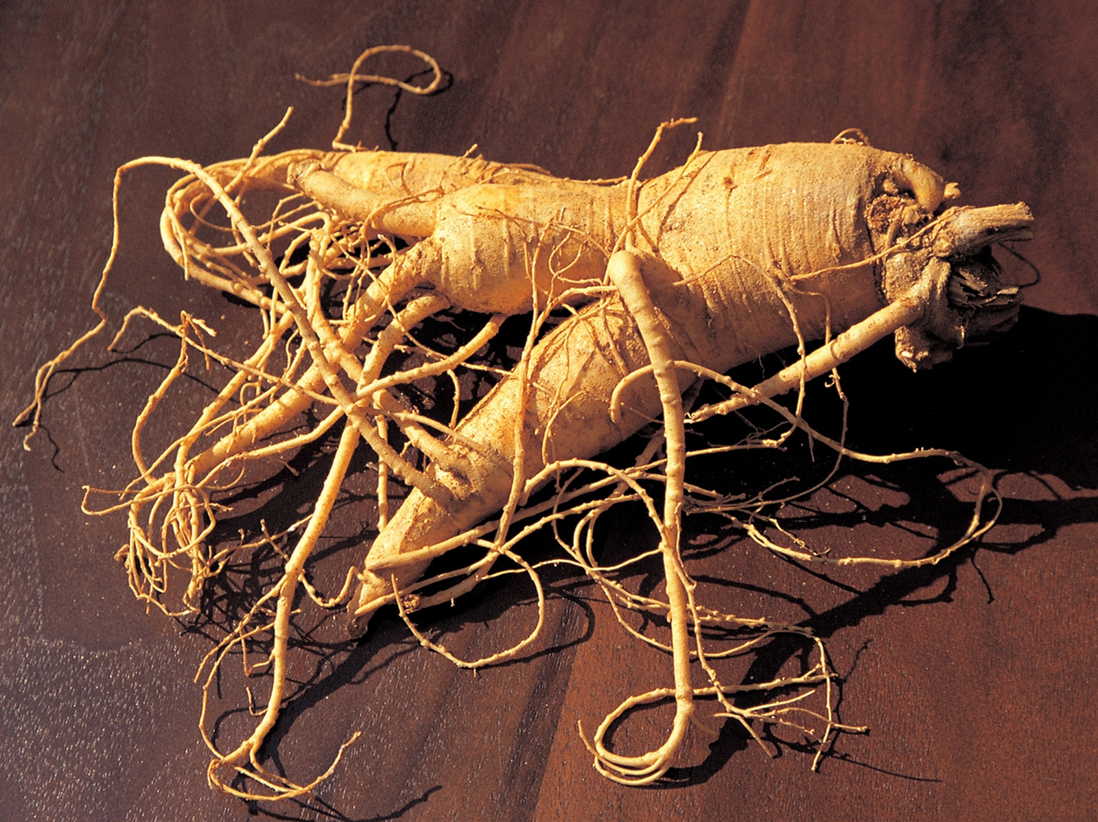 A fleshy ginseng root placed on a dark wooden surface.