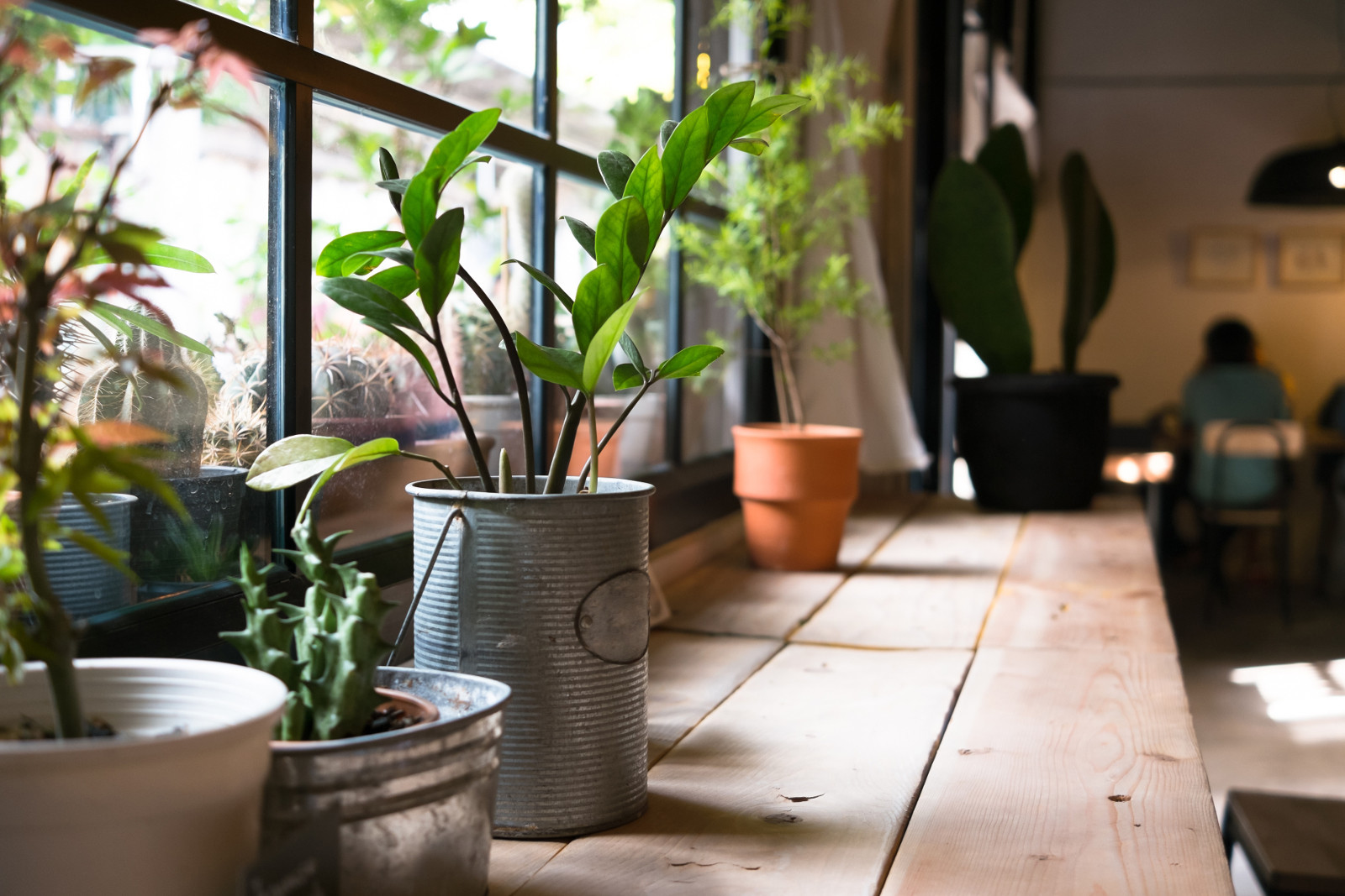 Healthy home interior with plants and view to outside through window