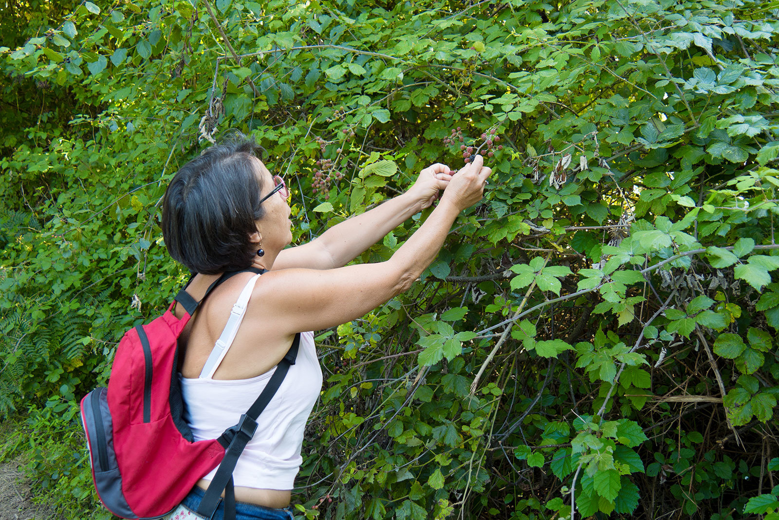 A mature woman with a backpack picks blackberries in nature.