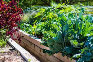 Raised planter in a urban garden with fresh organic vegetables