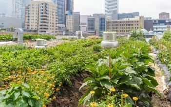 Lush urban garden on rooftop with highrises in background