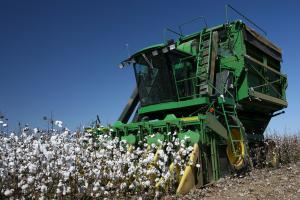 machine harvesting commercial cotton