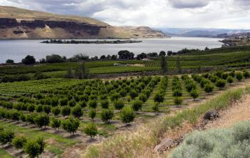 panoramic view of orchards with water and hills in the background