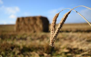 close up of straw with straw bale in the background