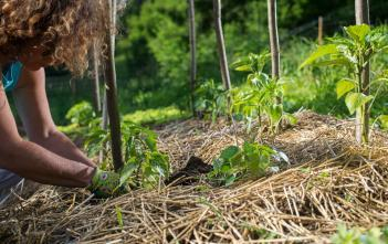 woman planting plants using mulch for no-till agriculture