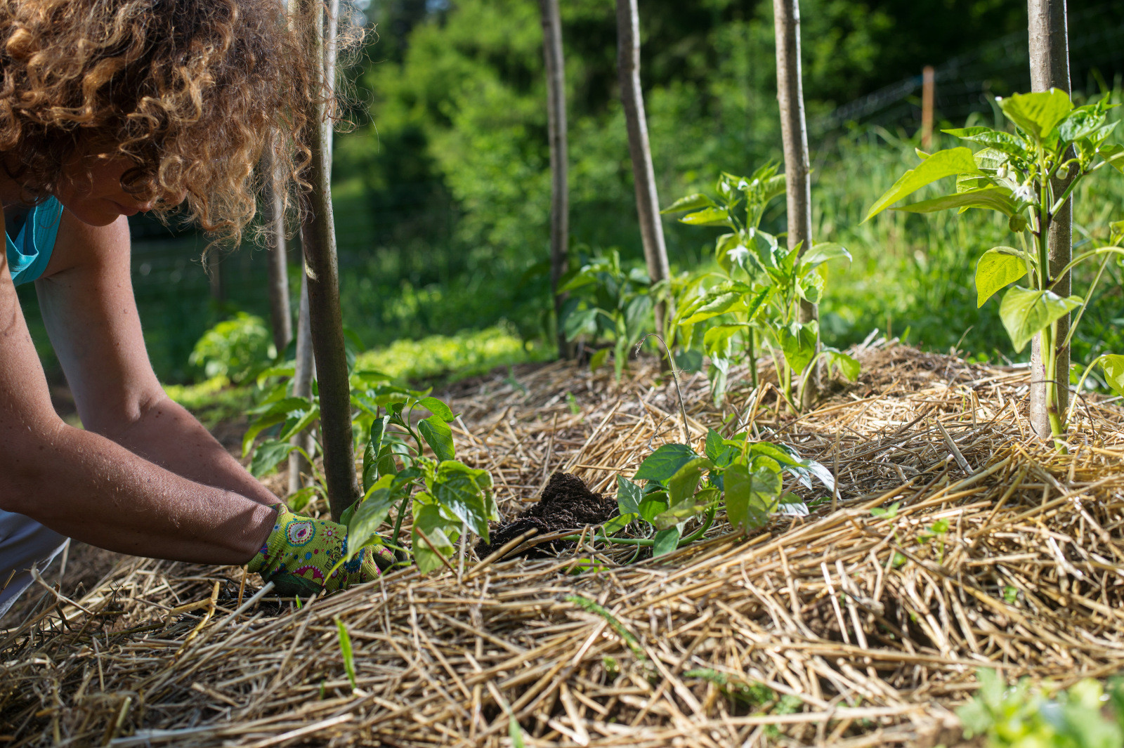 No Till Farming For Healthier Soil And Lifestyles