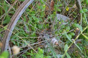bicycle wheel abandoned in a lot full of weeds