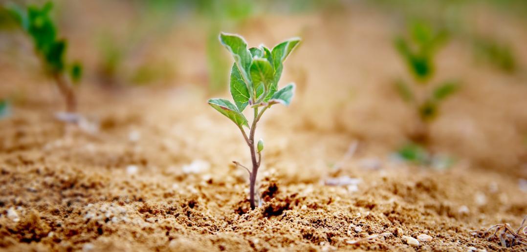 tender seedling growing out of top soil