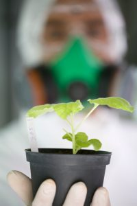 man in mask and lab coat holding genetically-modified plant