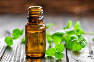 essential oil derived from mint plant