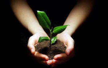 hands holding plant in rich terra preta