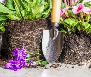 Garden trowel and healthy flowers to plant