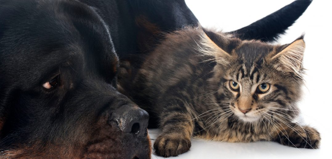healthy dog and cat side by side