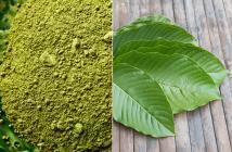 kratom powder + leaves