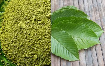 kratom powder + leaves