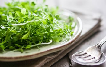 plate full of nutritious micro greens