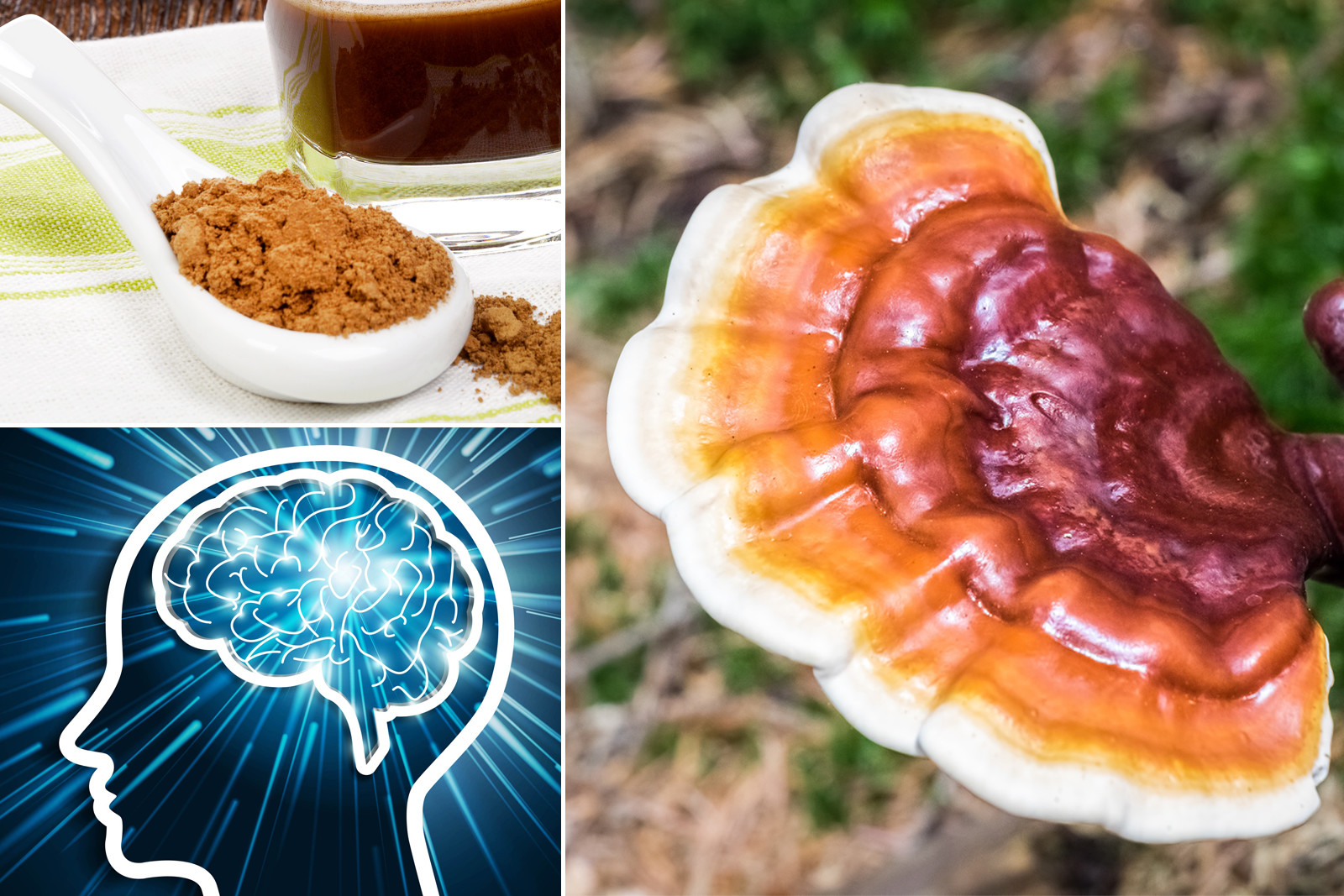 Everything You Need To Know About Reishi Mushroom Powder