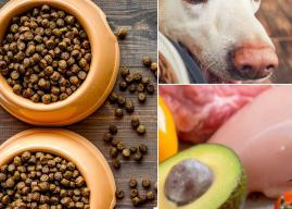 Top 24 Best Organic Dog Foods (And What to Know Before Buying)