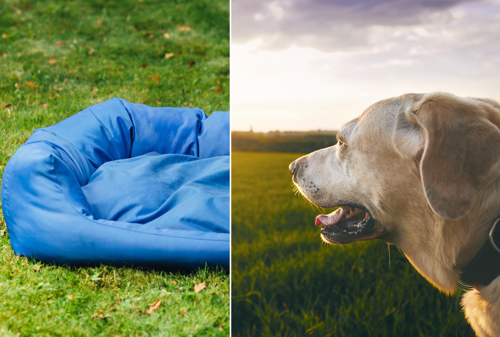 Top 24 Best Outdoor Dog Bed Options